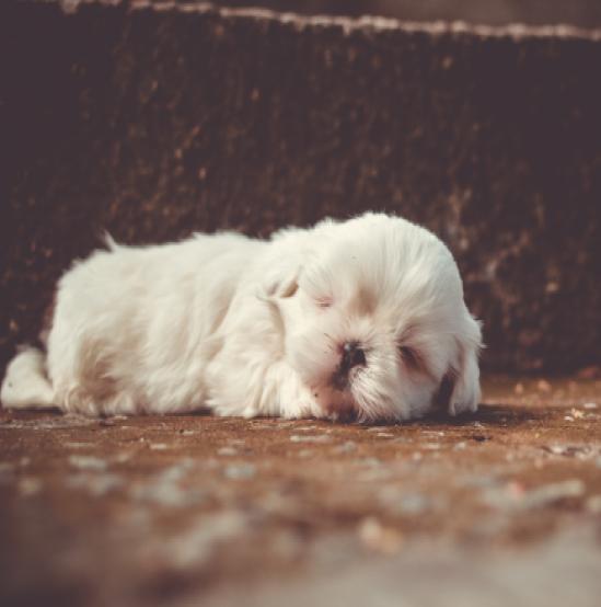 sleep like a puppy